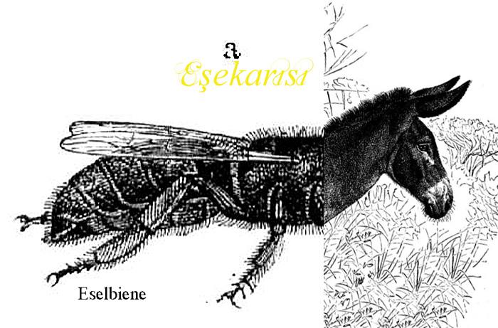 Eşekarısı, Eselbiene, heißt die Wespe auf Türkisch.