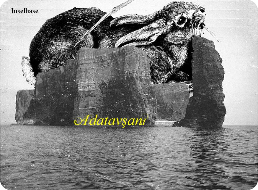 Adatavşanı, Inselhase, heißt das Kaninchen auf Türkisch.