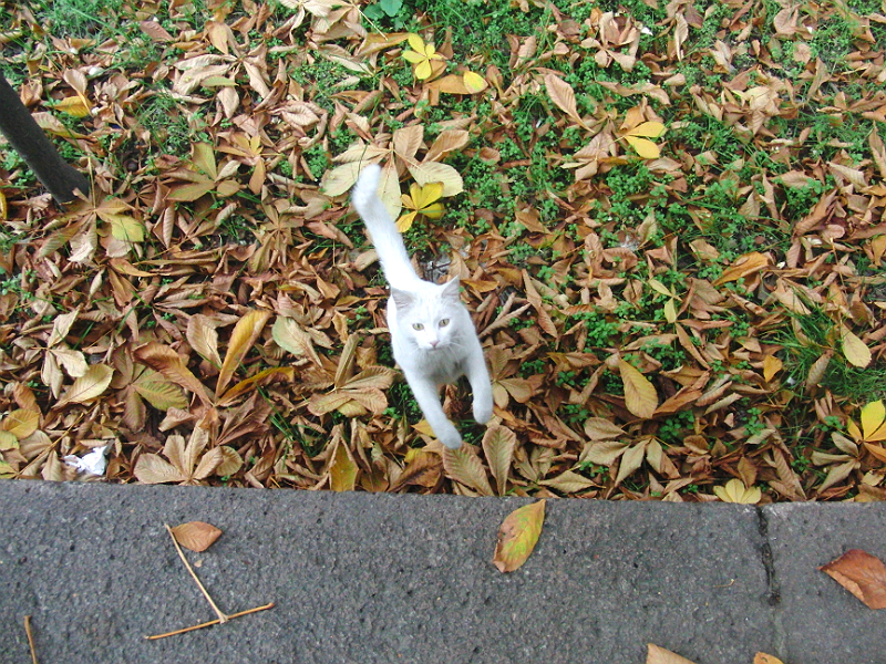 Angorakatze? Eher nicht, kommt ihr aber nahe. Also Ankara-Katze.
