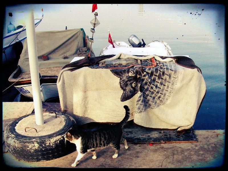 Hafenkatze, İzmir