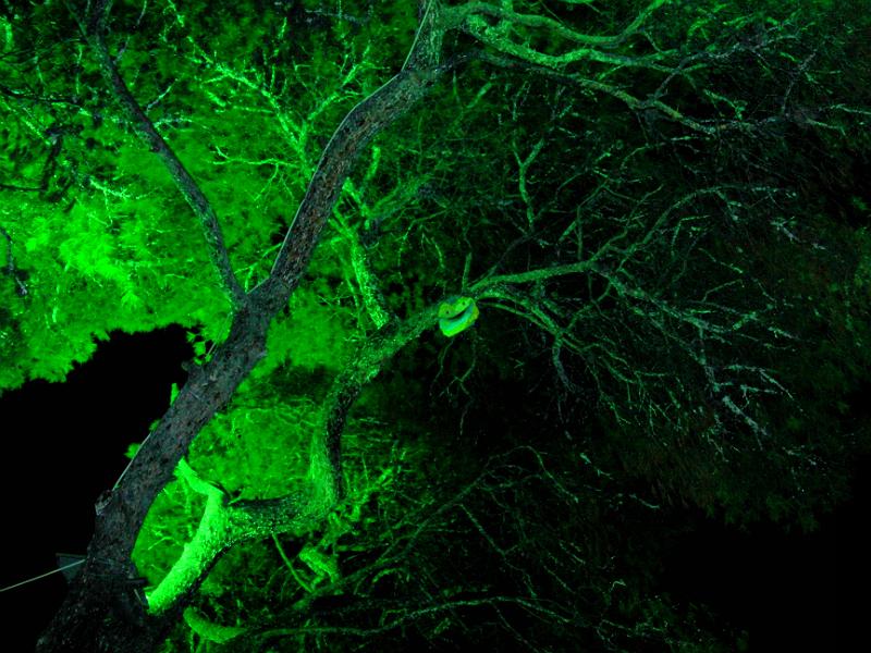 Der İzmir Kültürpark bei Nacht: Die türkische Comic-Figur Pepee im Baum