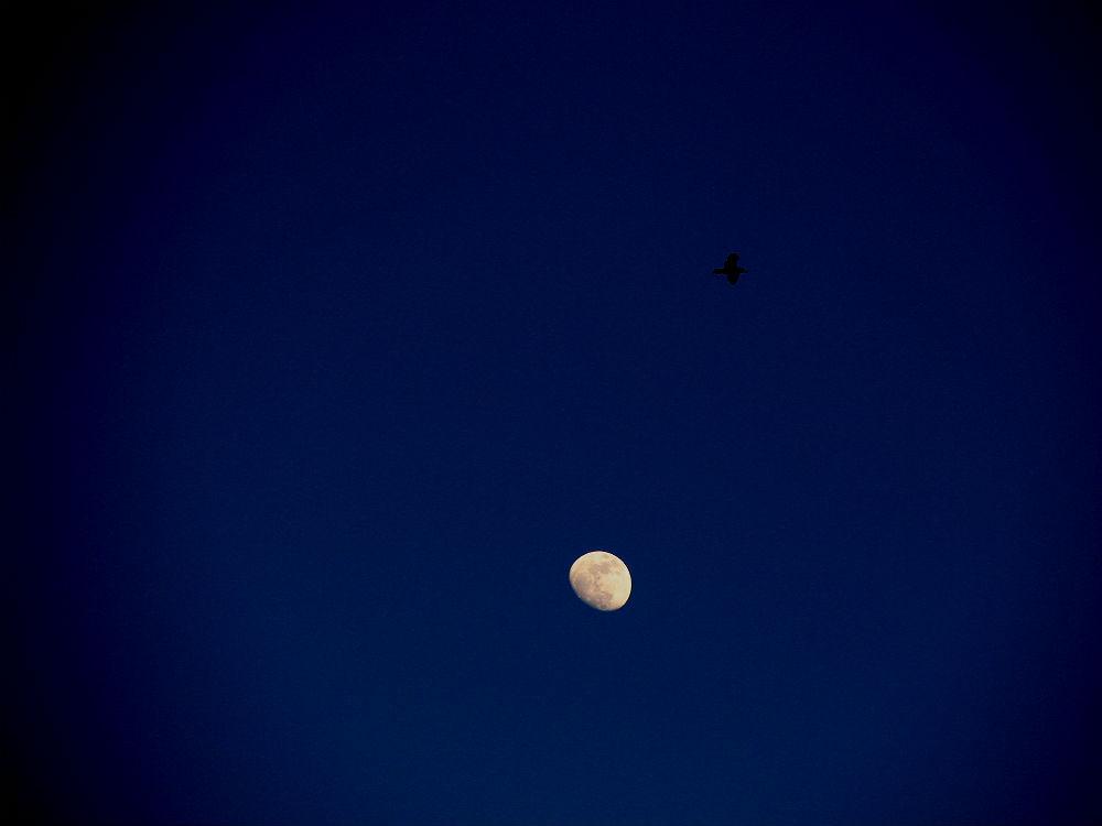 Kein Halbmond, Mond über İstanbul, 2014