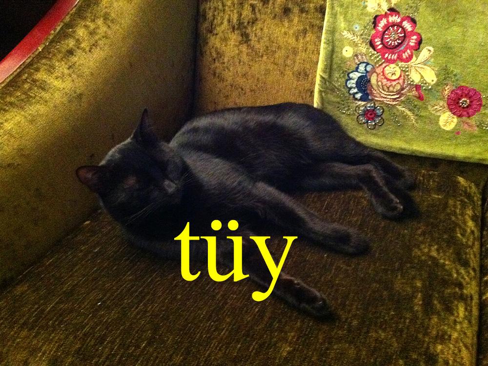 Foto: Katze in einem Laden in Galata, Istanbul
